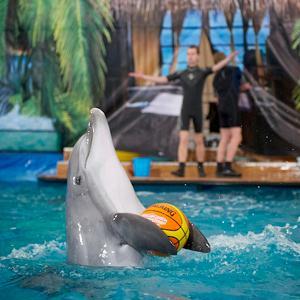 Дельфинарии, океанариумы Мамадыша