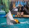 Дельфинарии, океанариумы в Мамадыше