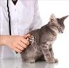 Ветеринарные клиники в Мамадыше